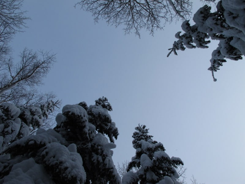 Look up! Great views of the snow laden trees.