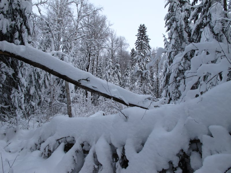 Snow everywhere.  There had been no winds to blow the snow out of the trees.