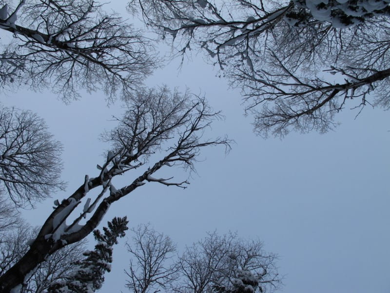 Great views of the snow laden trees.