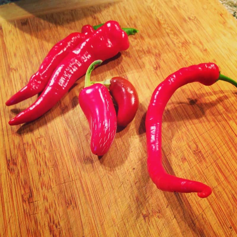 Hot peppers: Hot Portugal, red jalapeno and Cayenne.