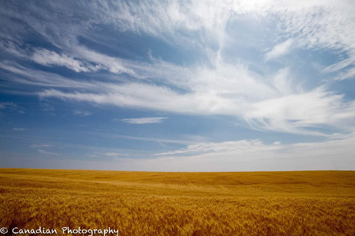 Fields of Gold - Shot in Central Washington State.